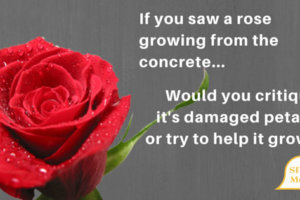 Growing Roses in the Concrete